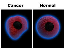 Cancer and Normal Cells
