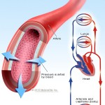 The Blood Pressure and Cholesterol Numbers