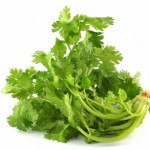 Cilantro – Aromatic herb with amazing nutritional facts