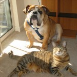 Earth-Friendly Flea Solutions for Pets