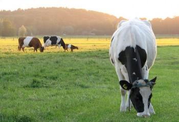 organic milk vs ordinary milk