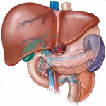 Laparoscopic Liver Resection Surgery